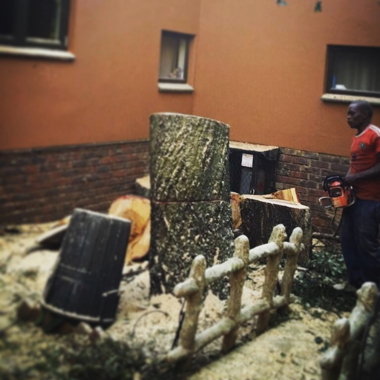 Removing a old tree that has damaged the roof of a house in Moreleta Park, Pretoria